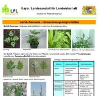 giftige Pflanzen - Ambrosia-Poster